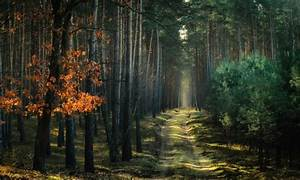 Nature  Landscape  Forest  Path  Atmosphere  Trees  Dirt