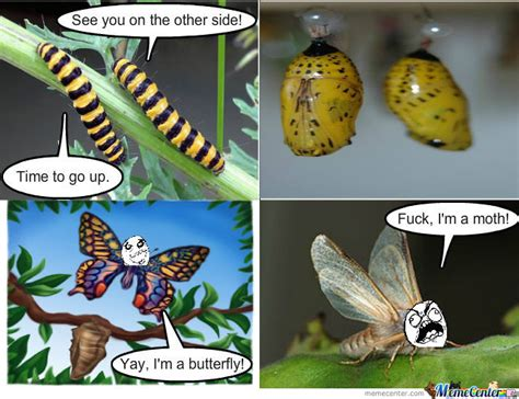 Moth Meme - poor moth by shadowhunter meme center
