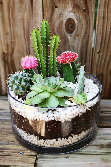 succulents create stunning diy decoration