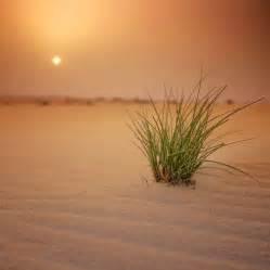 Arabian Desert by IsacGoulart on DeviantArt