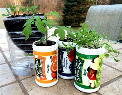 seedling crafts reuse orchard juice containers to plant seedlings