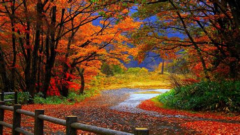 Autumn Hd Wallpapers For Mobile by Autumn Wallpaper Backgrounds 60 Images