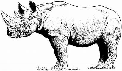 Coloring Rhinoceros Rhino Pages Animals Horned Printable