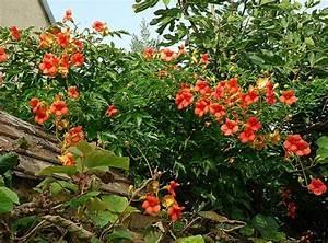 Tonnelle En Bambou : les 25 meilleures id es de la cat gorie bignone sur ~ Premium-room.com Idées de Décoration
