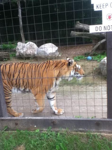 Trip To The Zoo Tiger Exhibit 1 By Marioman11 On Deviantart