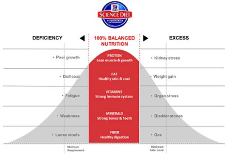 understanding  balanced nutrition   cat hills pet