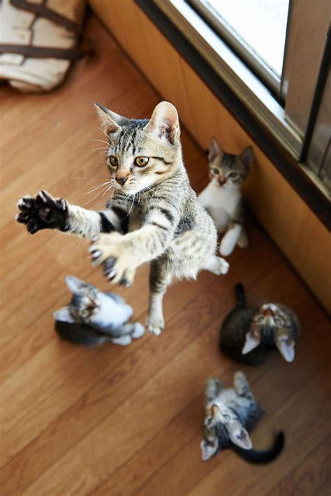 jumping cats  play   ninjas designbump