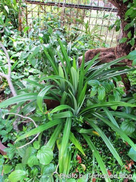 Bloggang.com : : diamondsky :   การปลูกพืช, ต้นไม้
