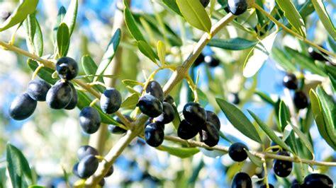 ullinj - AgroWeb
