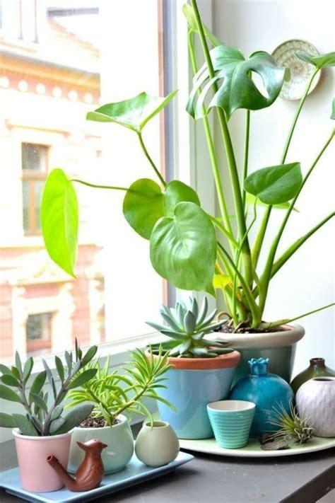piante da davanzale 1001 idee per decorazioni marine lavoretti fai da te