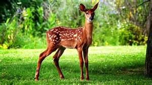 chocolate flowers cutest deer animal in forest wide new hd wallpapernew hd