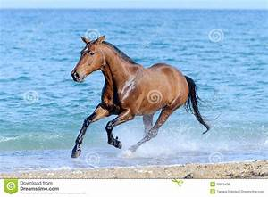 Horse In The Water Royalty Free Stock Image - Image: 30812436