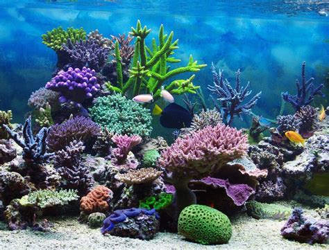 coral reef color the colors of a coral reef can be breathtakingly vibrant