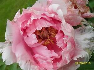 Dicke Weisse Raupen Im Blumenkasten : biosph renreservat flusslandschaft elbtalaue ~ Eleganceandgraceweddings.com Haus und Dekorationen