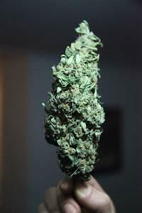 smoke weed gif   Tumblr