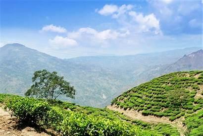 Java Indonesia Tea Plantation Island Britannica Fotolia