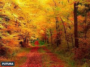 fond d39ecran automne flamboyant suisse With forum plan de maison 13 fond decran feuilles dautomne
