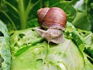 Cafard De Jardin Comment S En Débarrasser : tr fle comment se d barrasser de cette plante dans votre pelouse ~ Mglfilm.com Idées de Décoration