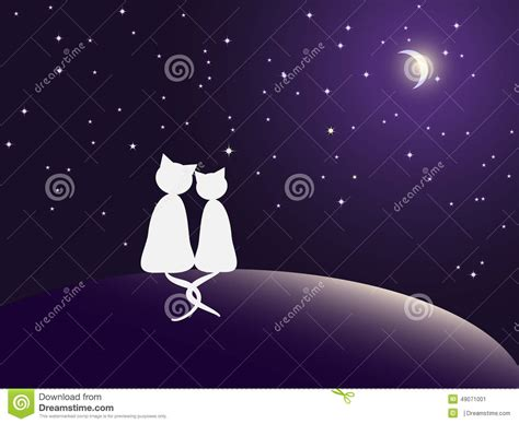 couple  cats watching stars stock vector image