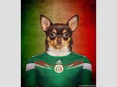 Dogs and Fifa World Cup 2014
