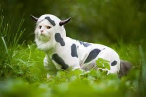 cat cow majestic cow cat aww