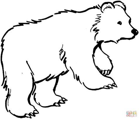 disegno  orso bruno  cammino da colorare disegni da