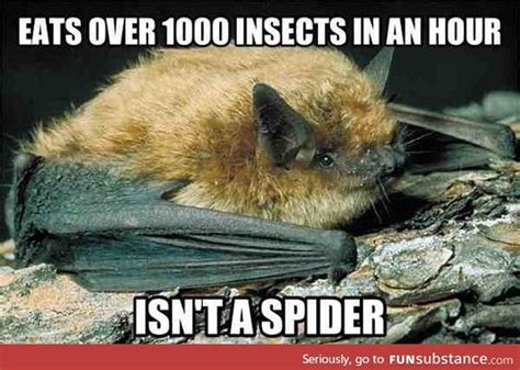 Bat Meme - bat meme 28 images cute bat memes best collection of funny cute bat pictures sarcastic
