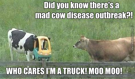 Cow Memes - mad cow memes image memes at relatably com