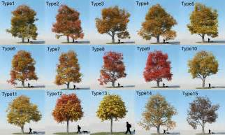 types of trees with pictures www pixshark images galleries with a bite