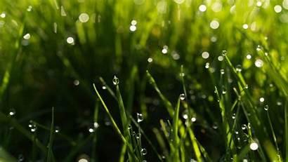 Rain Spring Desktop Wallpapers Natures