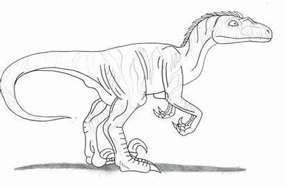 Raptor Drawing Coloring Velociraptor Getdrawings