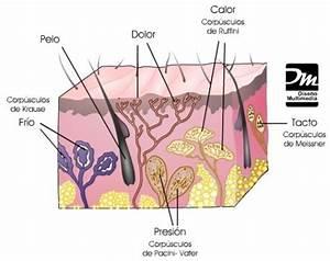 Primeros auxilios: Organos de los 5 sentidos