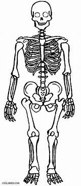 Skeleton Coloring Pages Printable Anatomy Skull Cool2bkids Human Bones Skeletons Sheets Books Heart sketch template