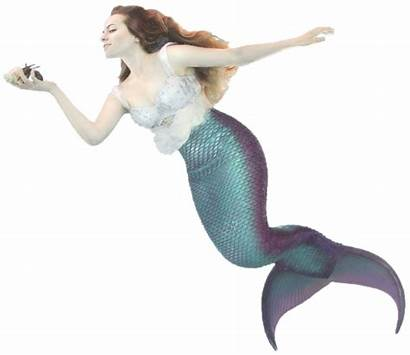 Mermaid Tail Tails Mertailor Swimming Let