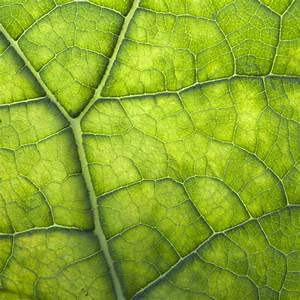 Warum Sind Pflanzen Grün : warum sind bl tter gr n und nicht zum beispiel blau simplyscience ~ Markanthonyermac.com Haus und Dekorationen