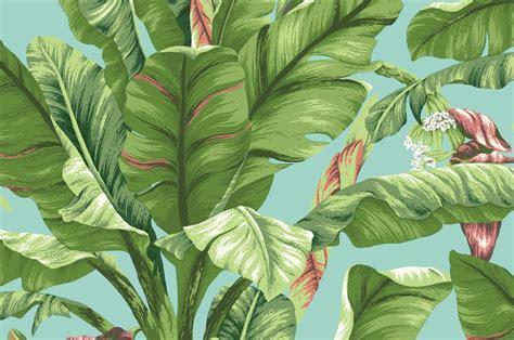 Banana Leaf Images Free Pixelstalknet