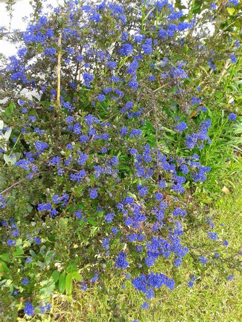 Lang Blühende Winterharte Pflanzen by Winterharte Bl 252 Hende Pflanzen Gesucht Seite 1