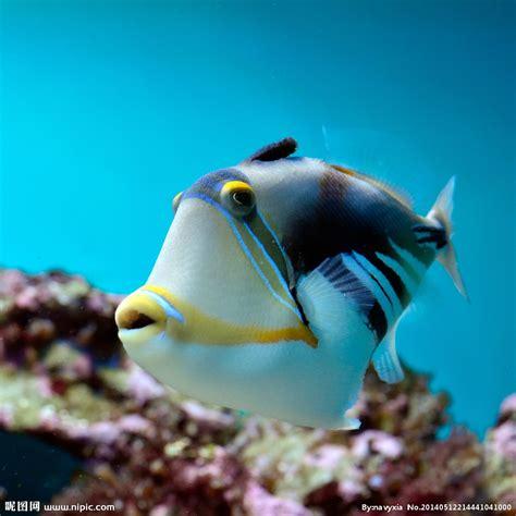 海洋生物摄影图__海洋生物_生物世界_摄影图库_昵图网nipic.com