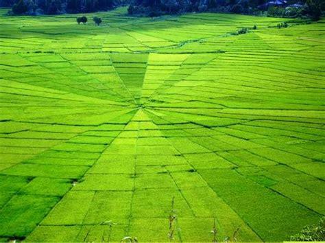 cancar spider web rice fields discovery komodo