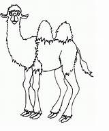 Camel Coloring Pages Printable Animal sketch template