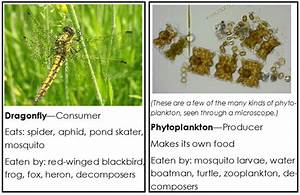 Ecosystem / producers, consumers, and decomposers / food ...