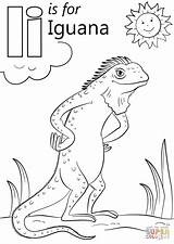 Iguana Coloring Letter Pages Igloo Preschool Alphabet Letters Supercoloring Printable Sheets Worksheets Dot Crafts Super Insect Drawing Abc Visit sketch template