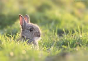 Super Cute Baby Bunnies