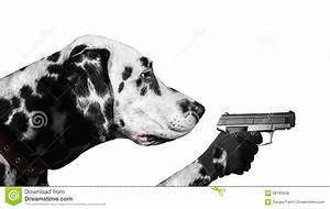 Dalmatian Dog With Guns Stock Photo - Image: 58185628