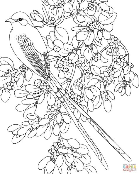 Oklahoma Scissor Tailed Flycatcher And Mistletoe Flower