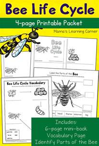 Science Worksheets For 3rd Grade Bee Cycle Worksheets Mamas Learning Corner