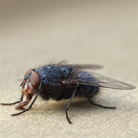 comment tuer les moucherons dans la cuisine comment tuer les moucherons an error occurred spcial mouches fruits image intitule get rid of