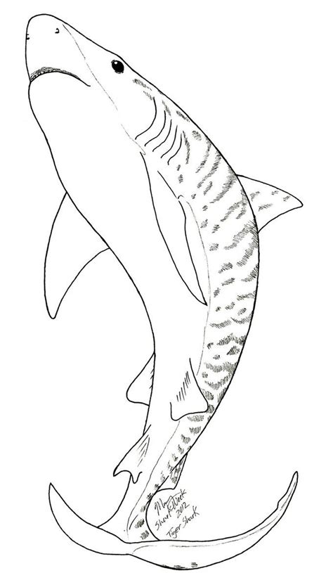 Coloring Shark by 73 Best Shark Coloring Pages Images On Shark