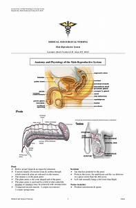 Nervous System Diagram Unlabeled Worksheet  Nervous  Free