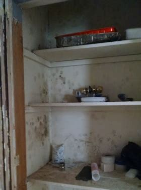 Mold In Closet by Closet Dehumidifier To Prevent Mold Types Features